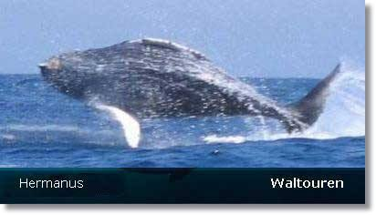 Whale Watching Tour Cape Town