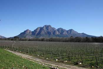 Weinproben Cape Town Winelands